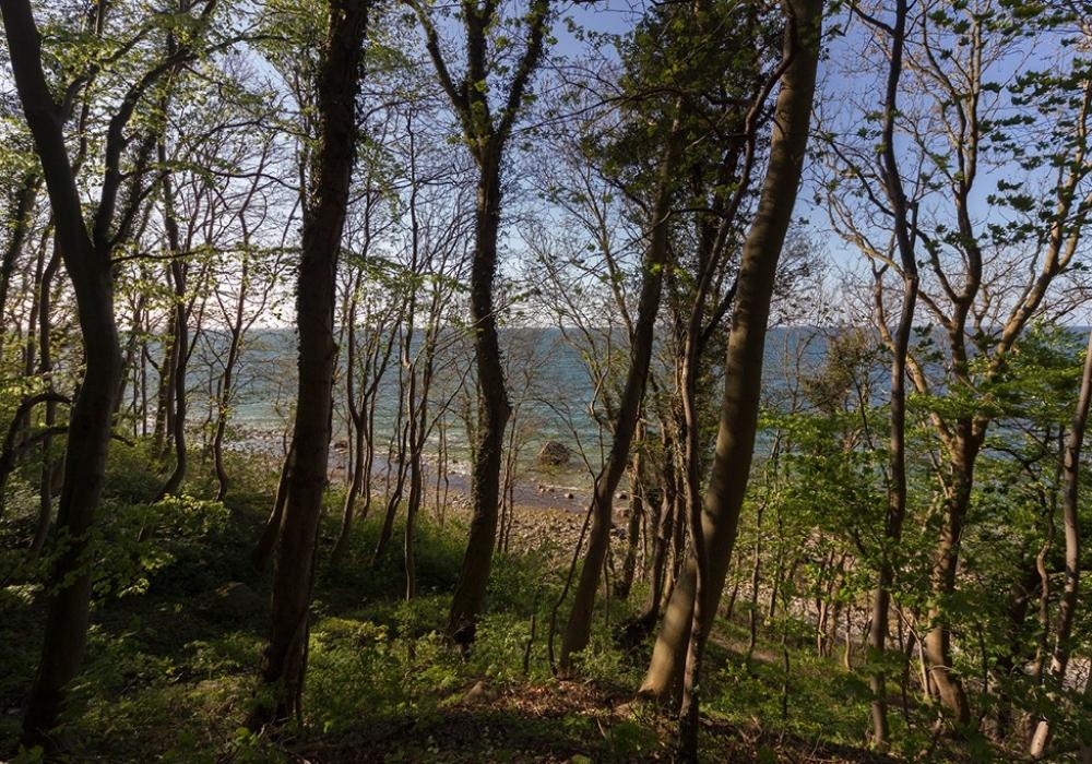 Rügen Findling Schwanenstein aus dem Wald